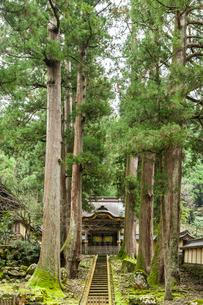 スギの木越しに見る永平寺勅使門の写真素材 [FYI01711227]