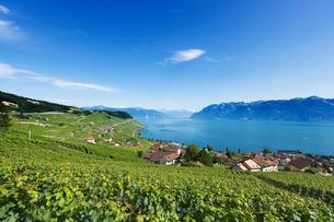 スイス ラボー地区 レマン湖畔ブドウ畑の写真素材 [FYI01711743]