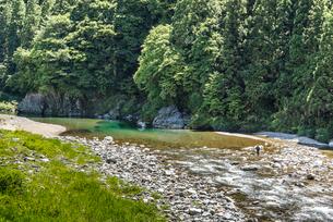 釣り人を見る板取川風景の写真素材 [FYI01711875]
