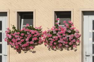 スイス シオン城近辺の民家の窓の写真素材 [FYI01711929]