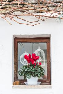 赤いシクラメンを飾った窓辺風景の写真素材 [FYI01711973]