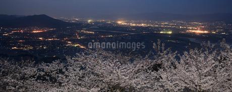 桜夜景 紀ノ川の写真素材 [FYI01712081]