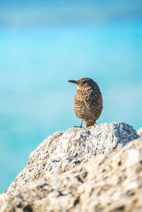 サンゴ礁に留まる1羽の野鳥の写真素材 [FYI01712092]