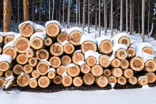 積み上げられたスギの丸太に雪が積もった風景の写真素材 [FYI01712150]