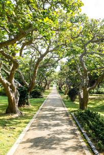 宮古島市熱帯植物園ディゴの並木道の写真素材 [FYI01712293]