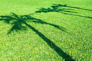 緑の芝生面にヤシの木の影を見るの写真素材 [FYI01712301]