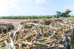 山積みのカットサトウキビと収穫機を見るサトウキビ畑の写真素材 [FYI01712446]