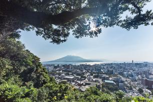 城山より樹木越しに鹿児島市街地と桜島を望むの写真素材 [FYI01712528]