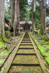 スギの木越しに見る永平寺勅使門の写真素材 [FYI01712545]