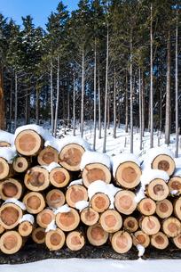 積み上げられたスギの丸太に雪が積もった風景の写真素材 [FYI01712624]