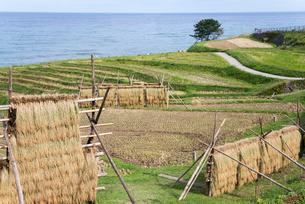 日本海を望む稲刈り後の白米千枚田の写真素材 [FYI01712691]