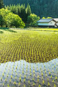 蔵を見る田植え直後の水田風景の写真素材 [FYI01712734]
