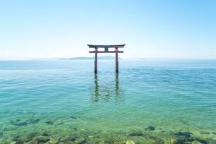 白鬚神社の湖中大鳥居の写真素材 [FYI01712810]