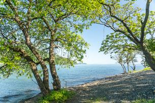 樹木越しに琵琶湖を望むの写真素材 [FYI01712846]