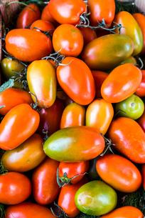 沢山の調理用イタリアントマトの写真素材 [FYI01713012]