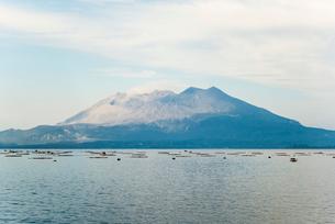 ハマチの養殖をする錦江湾越しに霞みかかる桜島を望むの写真素材 [FYI01713073]