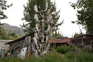 アラスカ ムースのツノで飾ったトーテムポールの写真素材 [FYI01713375]