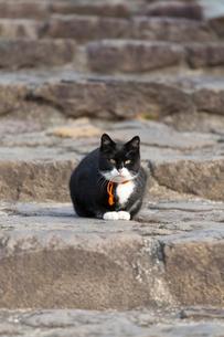 階段でしゃがむ白黒猫の写真素材 [FYI01713408]