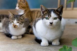 民家の前にいた猫たちの写真素材 [FYI01713578]