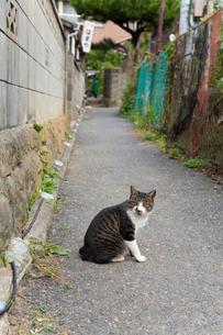 道端の猫の写真素材 [FYI01713707]