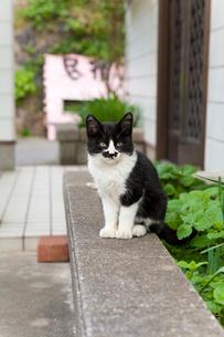 藍島の黒白猫の写真素材 [FYI01713794]