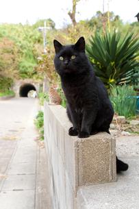 民家の塀に座る黒猫の写真素材 [FYI01713895]