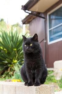 民家の塀に座る黒猫の写真素材 [FYI01713949]