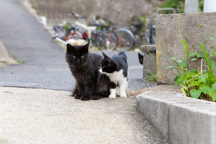 藍島の黒猫と黒白猫の写真素材 [FYI01714002]