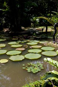大きな蓮が浮かぶ池の写真素材 [FYI01714059]
