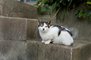 階段にいる猫の写真素材 [FYI01714121]