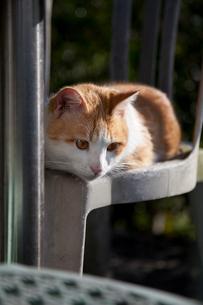 猫空(マオコン) オープンテラスのイスでくつろぐ猫の写真素材 [FYI01714223]
