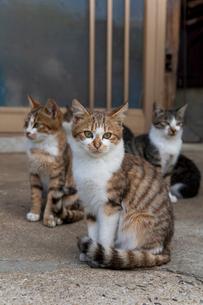 民家の前に集まる猫たちの写真素材 [FYI01714458]