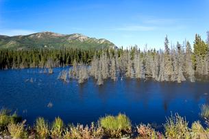 ユーコン ソルファー湖の写真素材 [FYI01714544]