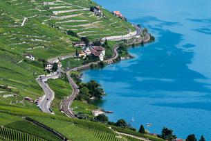 スイス ラボー地区ブドウ畑の写真素材 [FYI01714852]