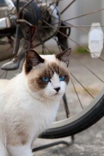 自転車と猫の写真素材 [FYI01714856]