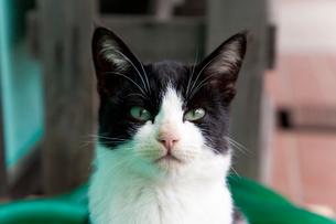 緑色のホースと黒白猫の写真素材 [FYI01715138]
