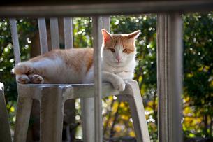 猫空(マオコン) オープンテラスのイスでくつろぐ猫の写真素材 [FYI01715186]