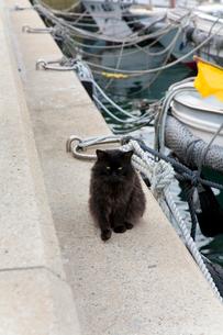 藍島の港にいた黒猫の写真素材 [FYI01715262]