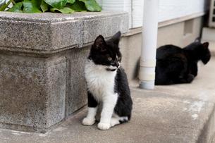 藍島の黒白猫の写真素材 [FYI01715345]
