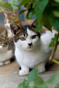民家の前にいた猫の写真素材 [FYI01715391]