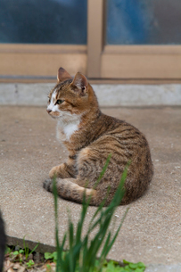 猫の丸い背中の写真素材 [FYI01715410]