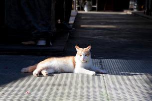 猫空(マオコン)に暮らす猫の写真素材 [FYI01715420]