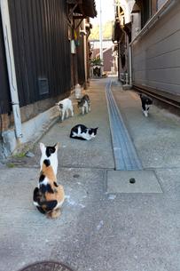 真鍋島の猫の写真素材 [FYI01715635]