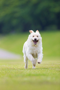 河原を走る犬の写真素材 [FYI01715865]