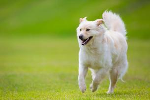 河原を走る犬の写真素材 [FYI01716113]