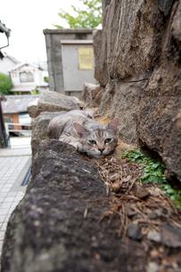 尾道の猫の写真素材 [FYI01716265]