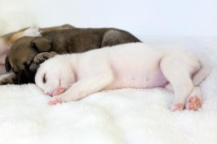 眠る三匹の子犬の写真素材 [FYI01716429]