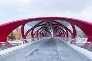 カナダ アルバータ州カルガリー ピースブリッジ の写真素材 [FYI01716486]