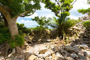 沖縄世界遺産、今帰仁城のソイツギの写真素材 [FYI01716581]