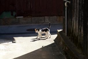 真鍋島の猫の写真素材 [FYI01716696]